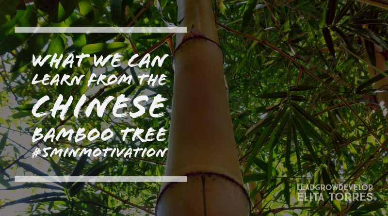 What We Can Learn From The Chinese Bamboo Tree About Dreams