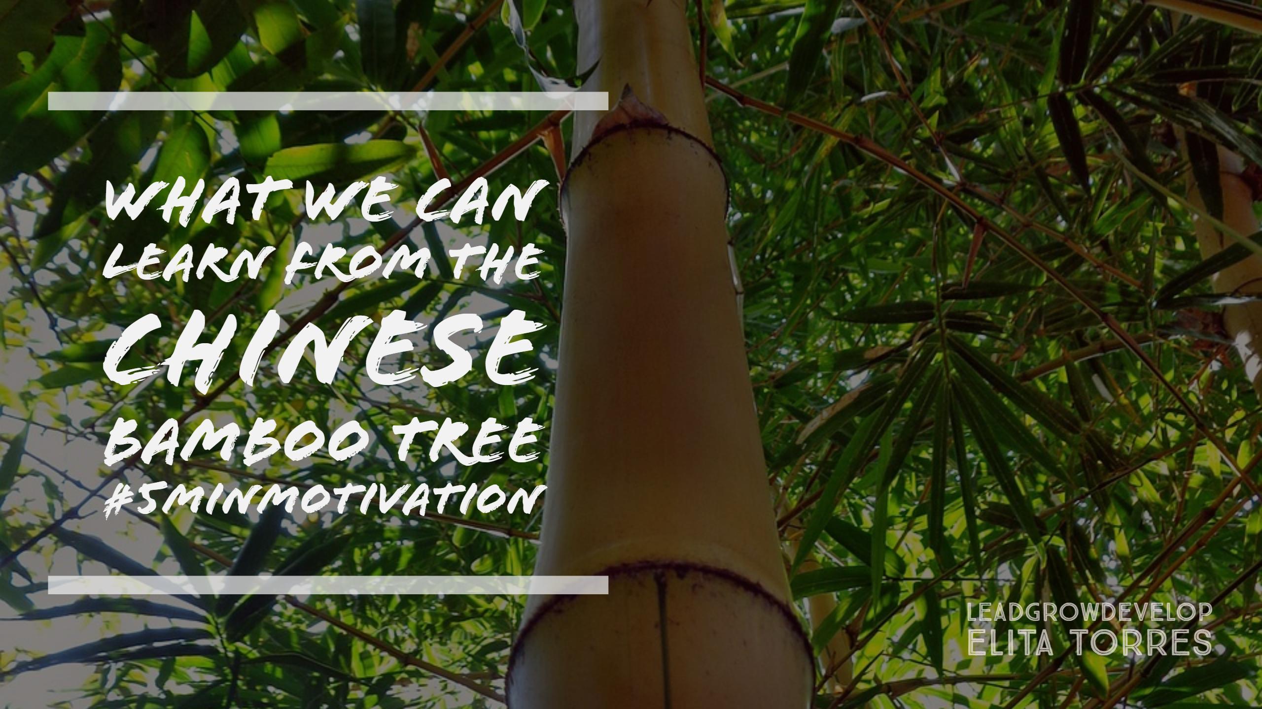 chinese-bamboo-tree